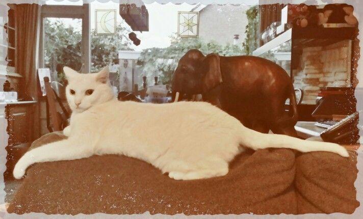 Big White Kitty
