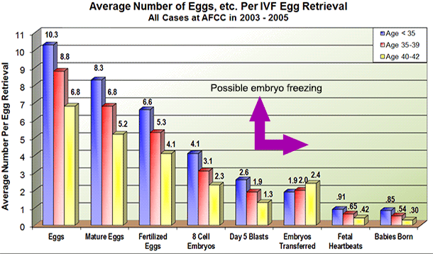 Average number of eggs, embryos and babies born per IVF cycle   IVF