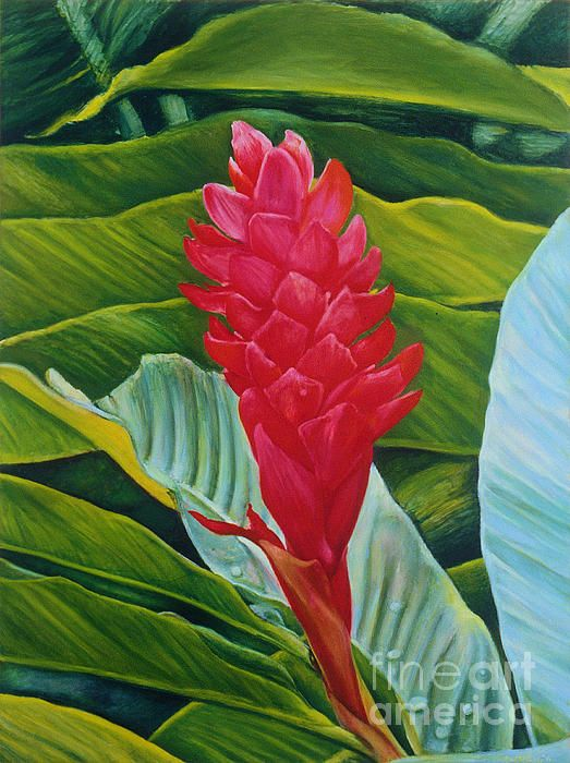 One Of The Most Beautiful Flowers Of The Tropics Ginger Flower Botanical Prints Flower Painting
