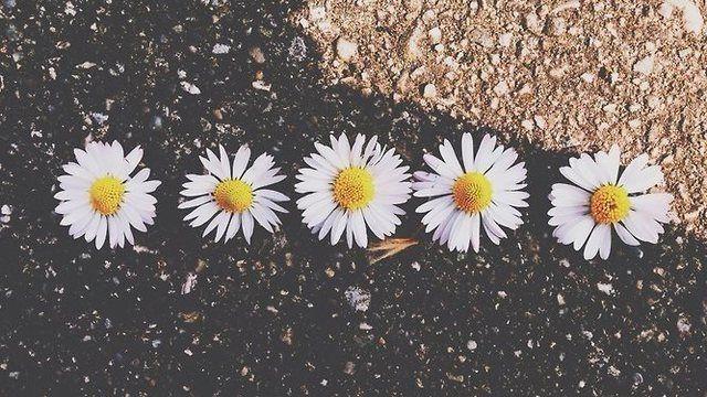 Flores Tumblr Buscar Con Google Wallpaper Pinterest Facebook