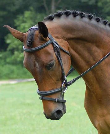 Red Barn Centerline Dressage Bridle-also available in Weymouth