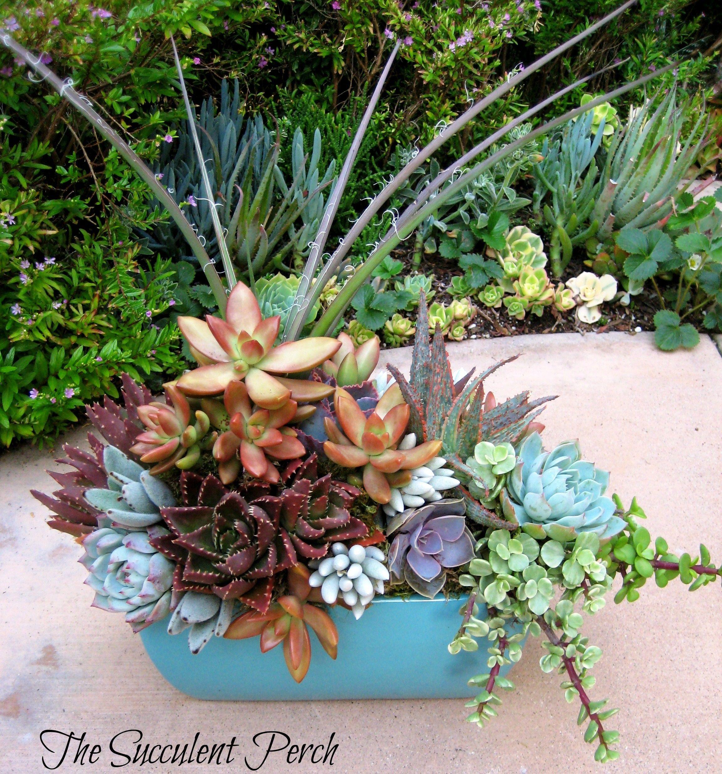 Floral Style Succulent Container Arrangement By Cindy Davison Of The