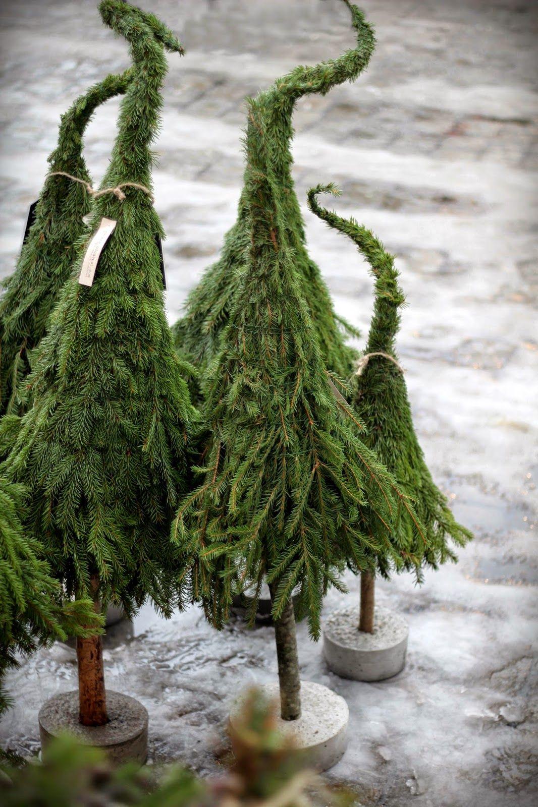 b umchen basteln weihnachten advent und deko weihnachten. Black Bedroom Furniture Sets. Home Design Ideas