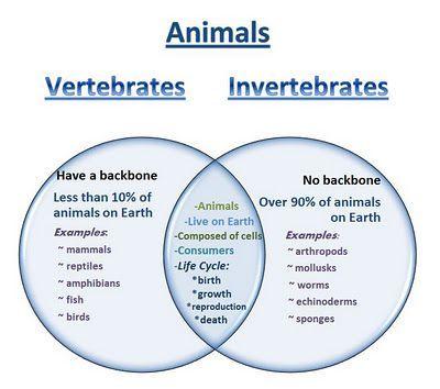 Learning ideas grades k 8 venn diagram vertebrates and learning ideas grades k 8 venn diagram vertebrates and invertebrates ccuart Gallery