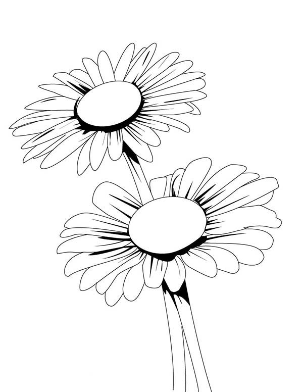 Blooming Daisy Flower Coloring Page Download Print Online Coloring Pages For Free Color Nimbus Flower Coloring Pages Flower Drawing Online Coloring Pages