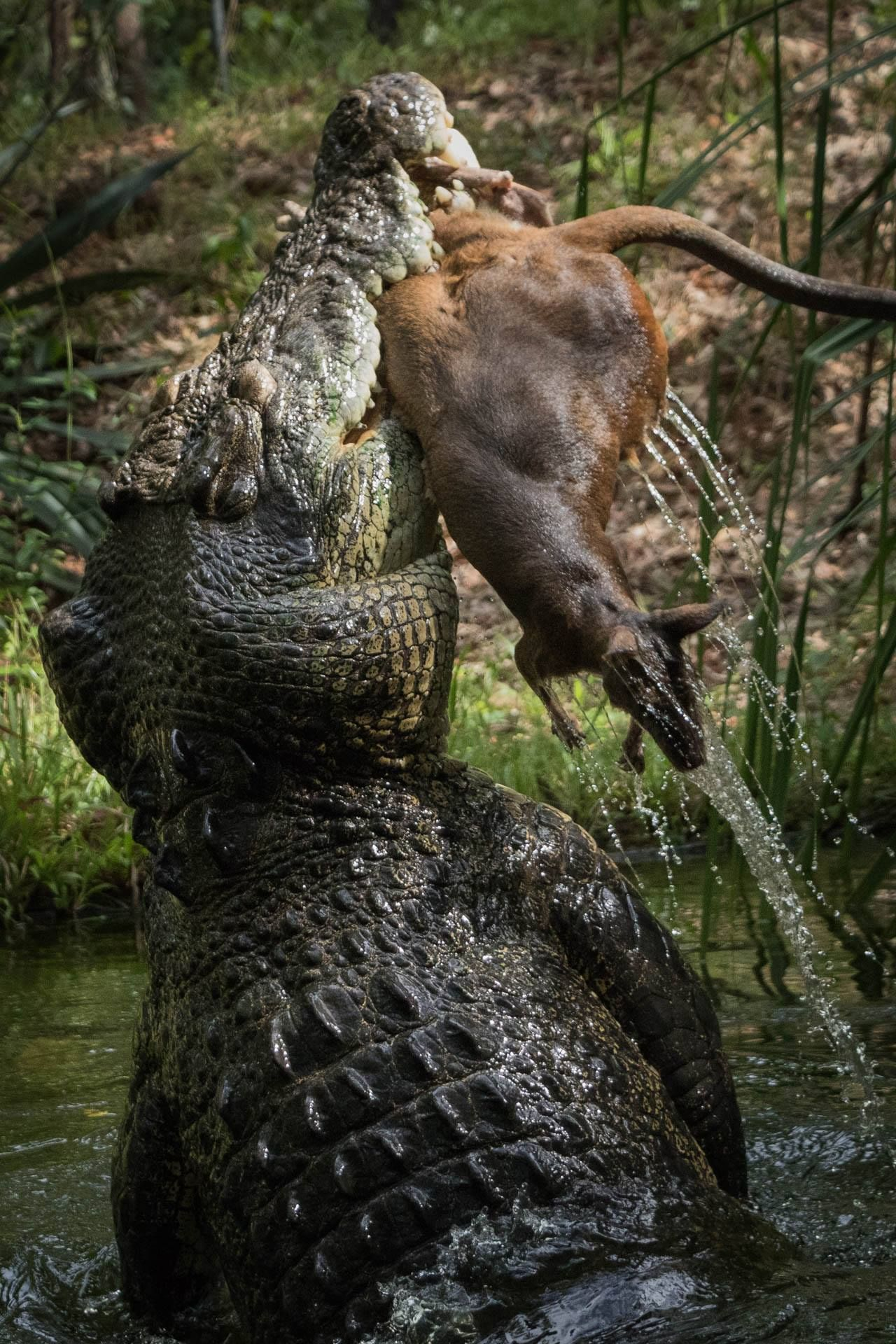 Pin de VIKI... en WOOOW !!!... | Pinterest | Naturaleza, Animales y ...