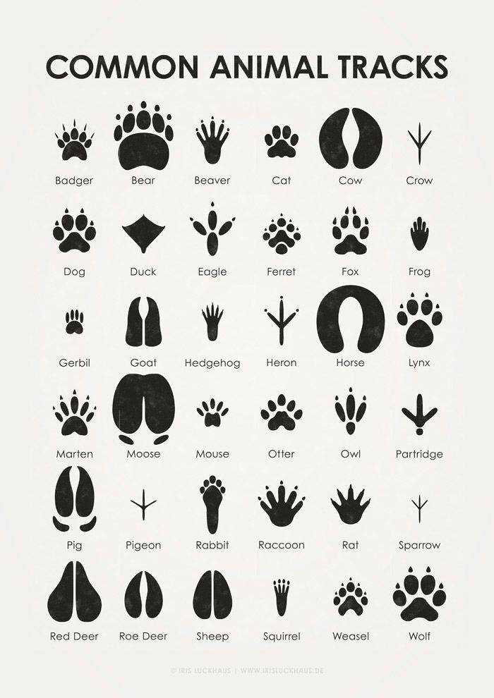 Sheets for the identification of different leaves, animal