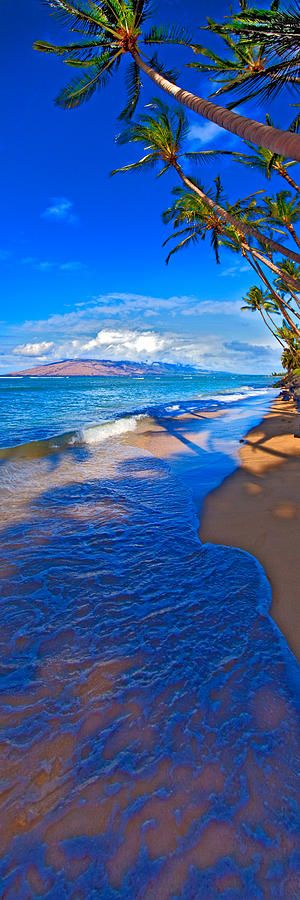 Palms in west Maui, Hawaii • photo: James Roemmling on FineArtAmerica Lanai in the distance