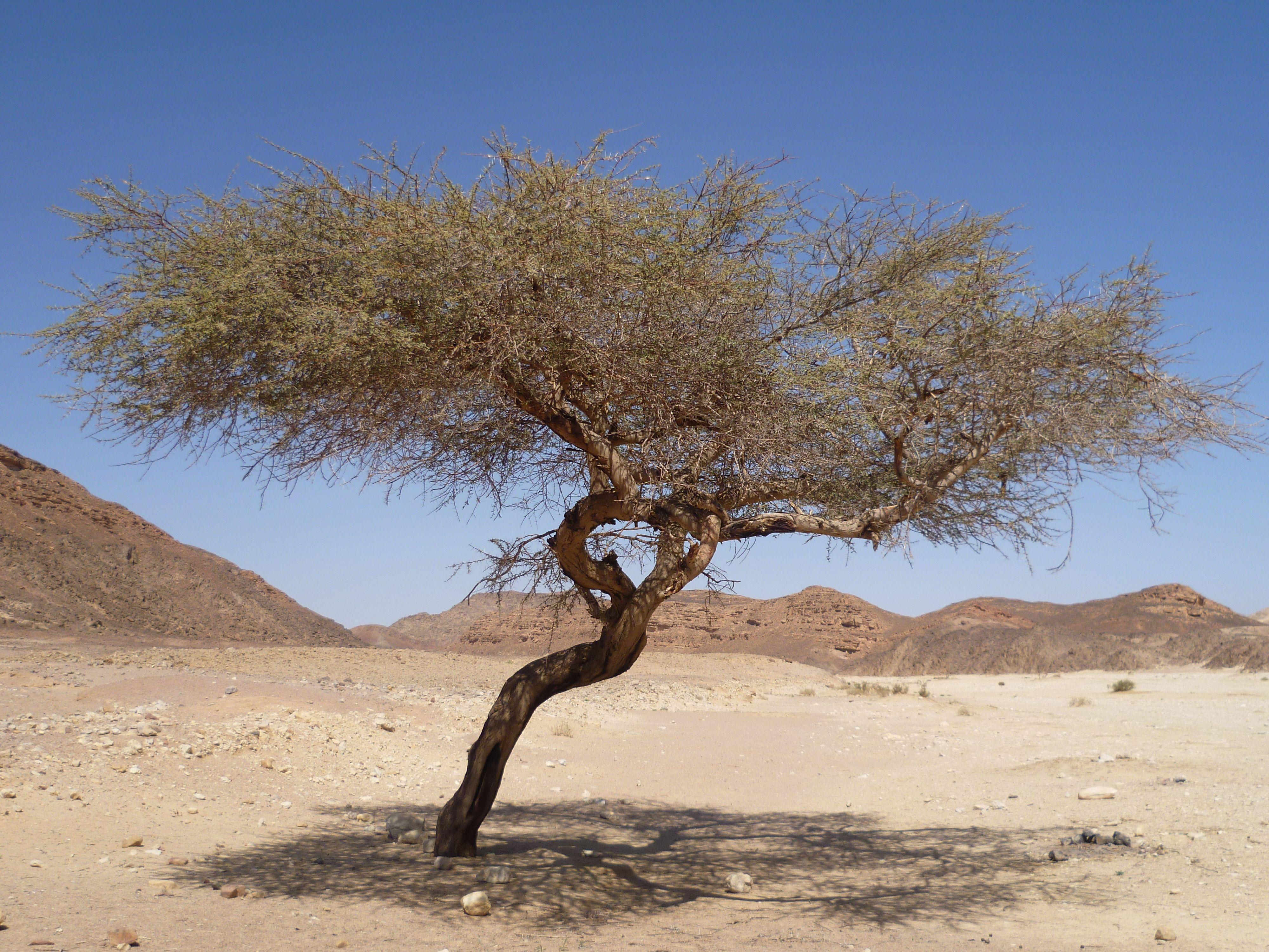 Разновидности листьев деревьев с названиями и фото убогое радио