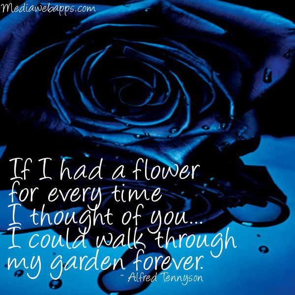 Images Of Roses With Quotes Rose Blue Rose Roses Flowers Quote