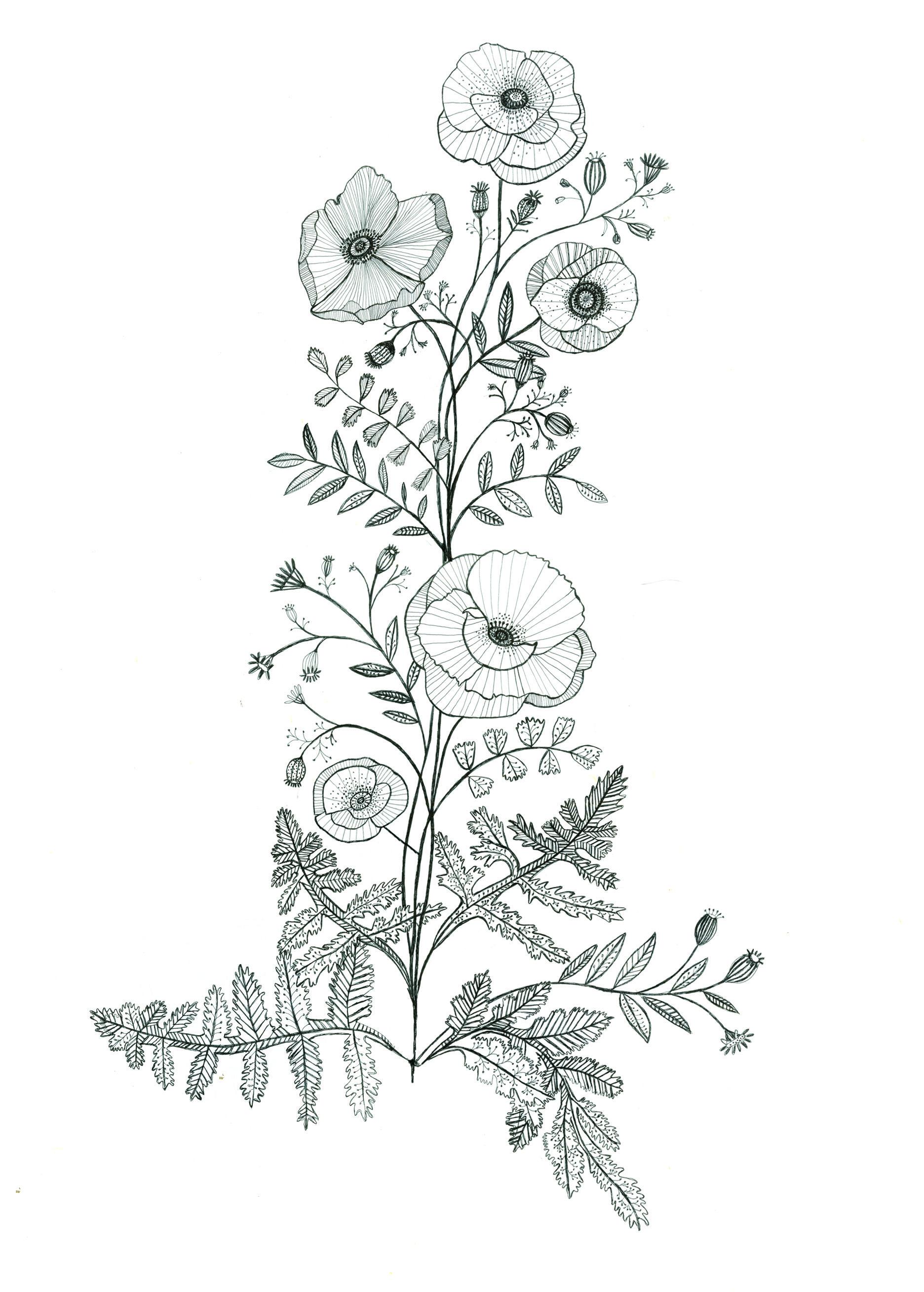 Poppy tattoo design by Katt Frank | to draw to draw ...