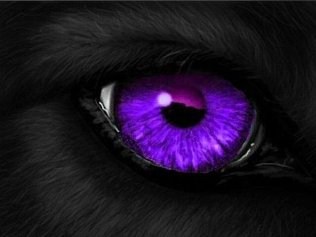 White Wolf With Purple Eyes Black wolf with...