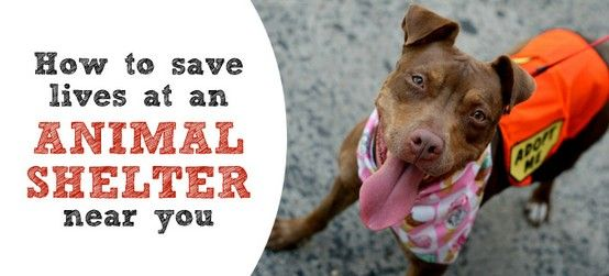 How to save lives at a shelter near you Creative