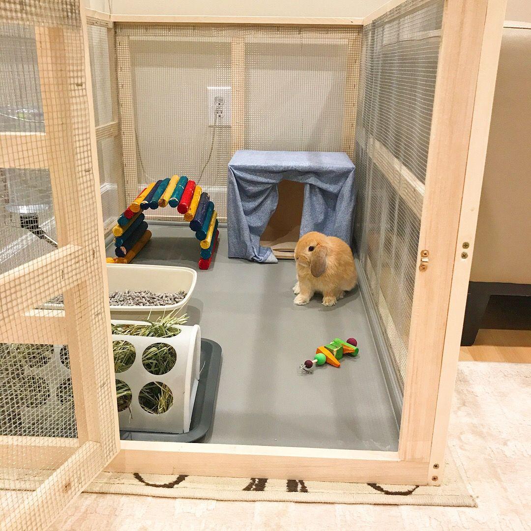 Pin By Grace On Smokey Diy Bunny Cage Indoor Rabbit Bunny Room