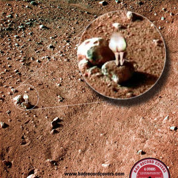 NASA Mars Phoenix probe discovers new Mars Moon   Progress ...