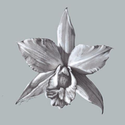 Cattleya Orchid Drawings Orquideas Artificiales Tatuajes De Nombres Tatuajes