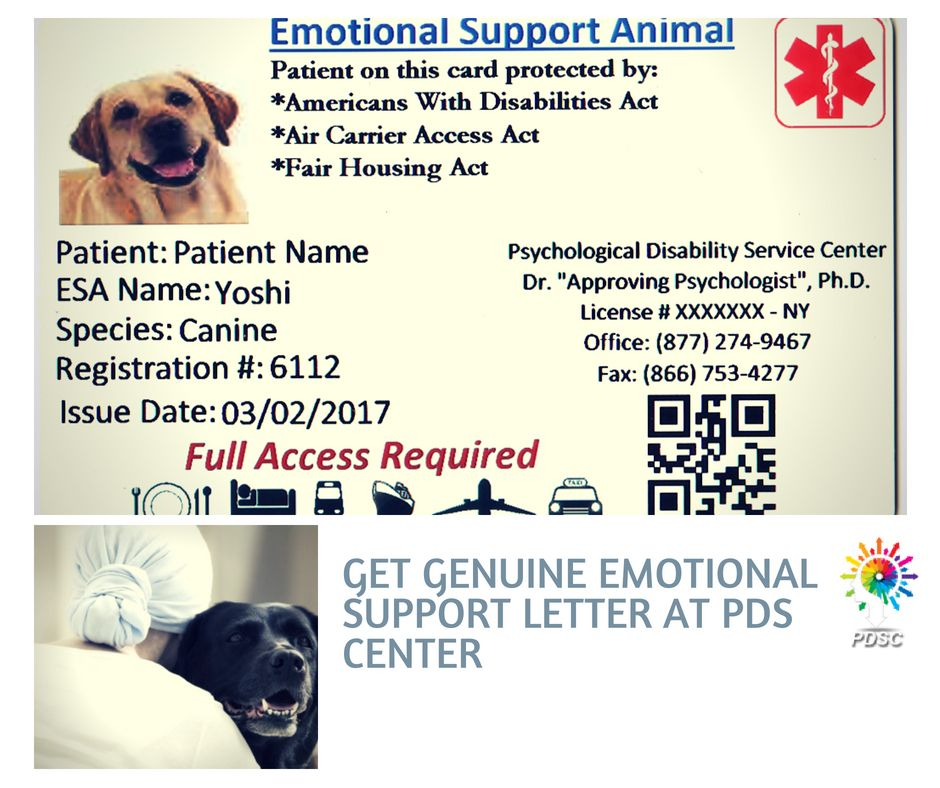 15 Service Animal Letters For Disabilty Ideas Animal Letters Service Animal Emotional Support Animal