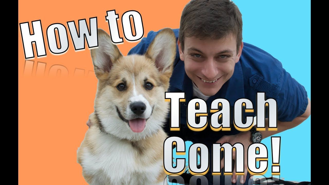 Come when Called The FASTEST Way to Teach YOUR DOG to
