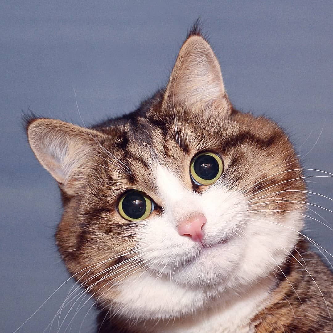Living emoji cat (rexiecat) • Instagram photos and videos