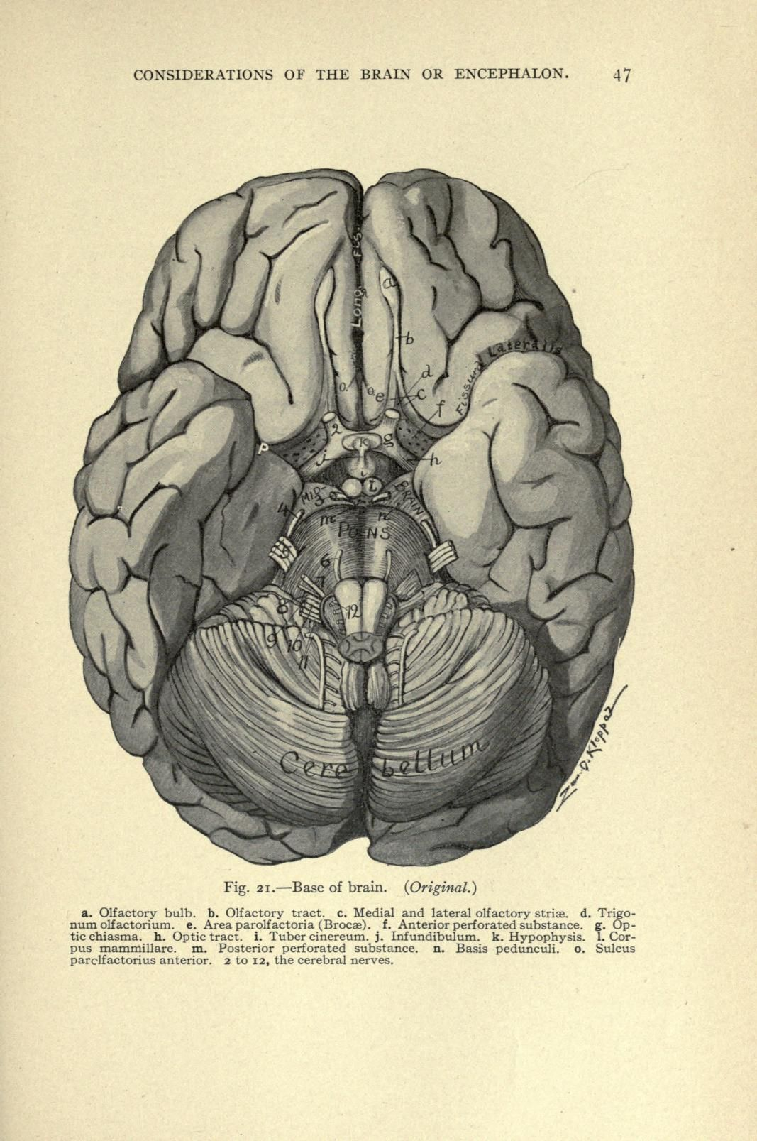 1907. Anatomy of the brain and spinal cord, - Biodiversity Heritage ...