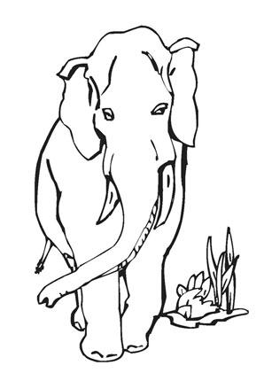 Ausmalbild Afrikanischer Elefant Afrikanischer Elefant Ausmalen Elefant Ausmalbild