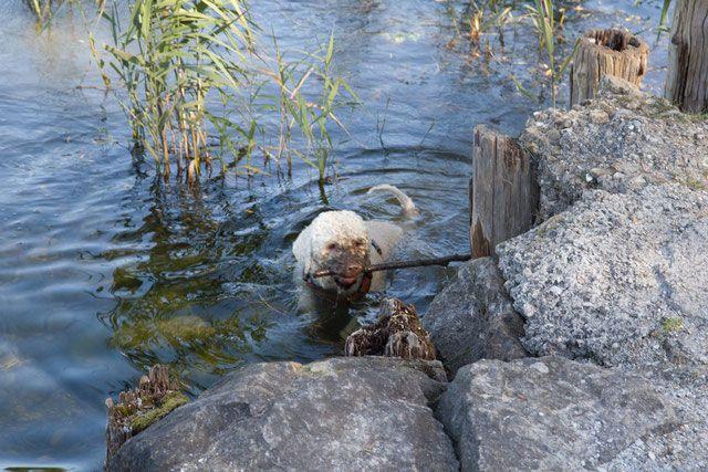 Freddo at work ; ) (mit Bildern) Hunde, Liebenswert, Italien