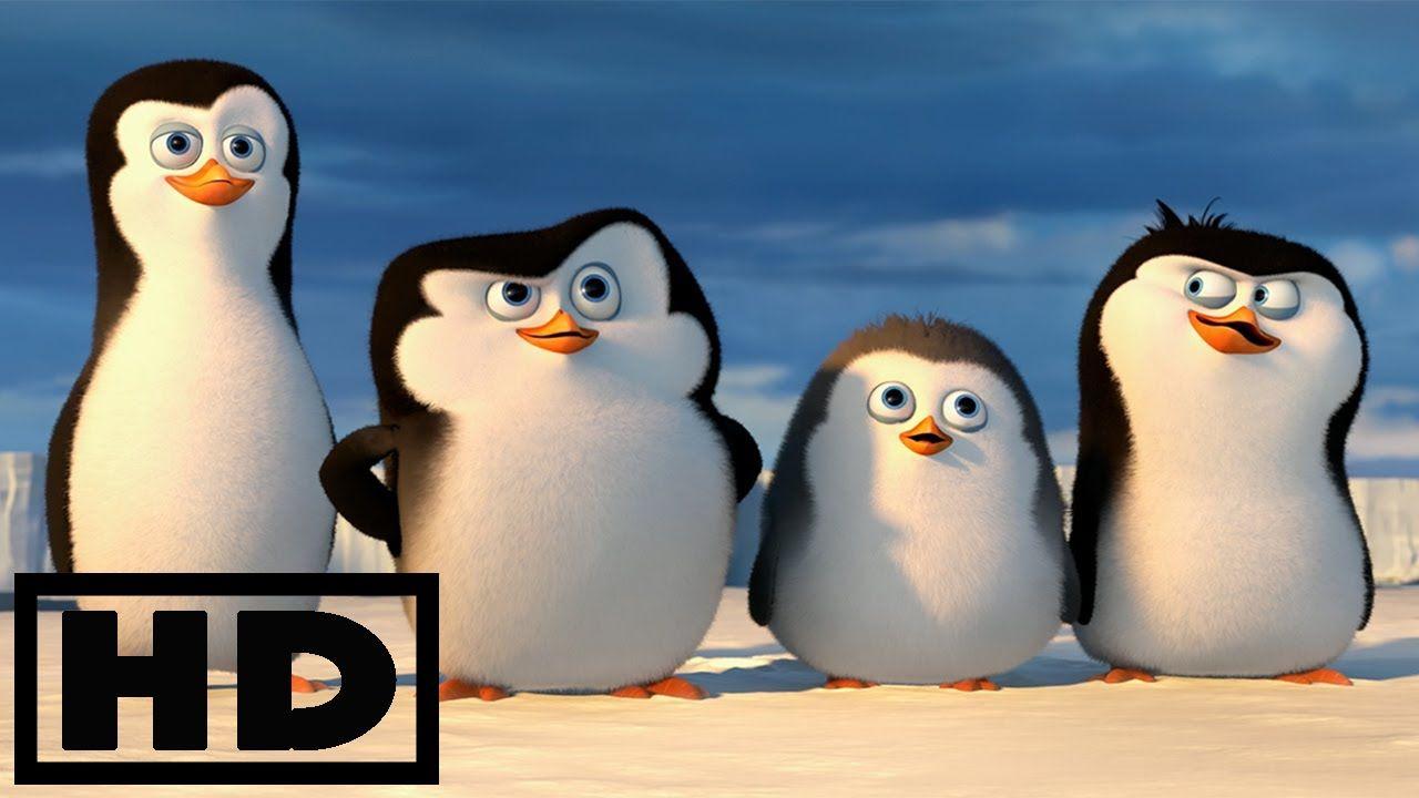 Youtube Madagascar Movie Penguins Of Madagascar Penguins