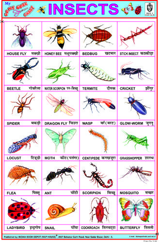 Insects English worksheets for kids, Hindi language