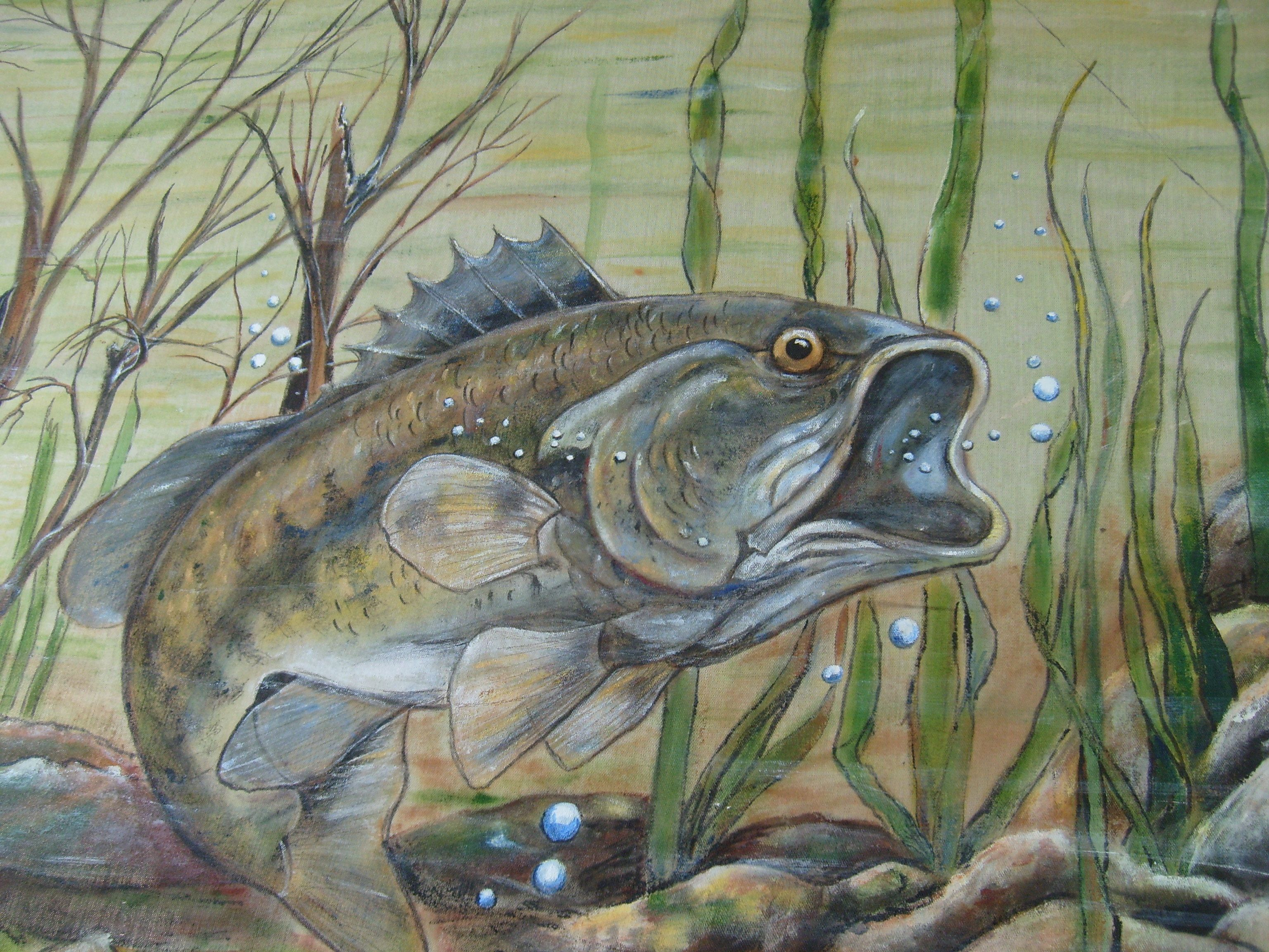 Large Mouth Bass Painting Fish Art Wildlife Paintings Fish Painting