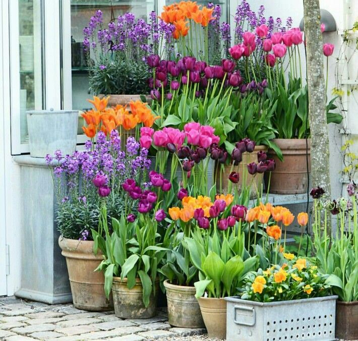 What A Gorgeous Picture Idees Jardin Deco Jardin Jardinage En Pots