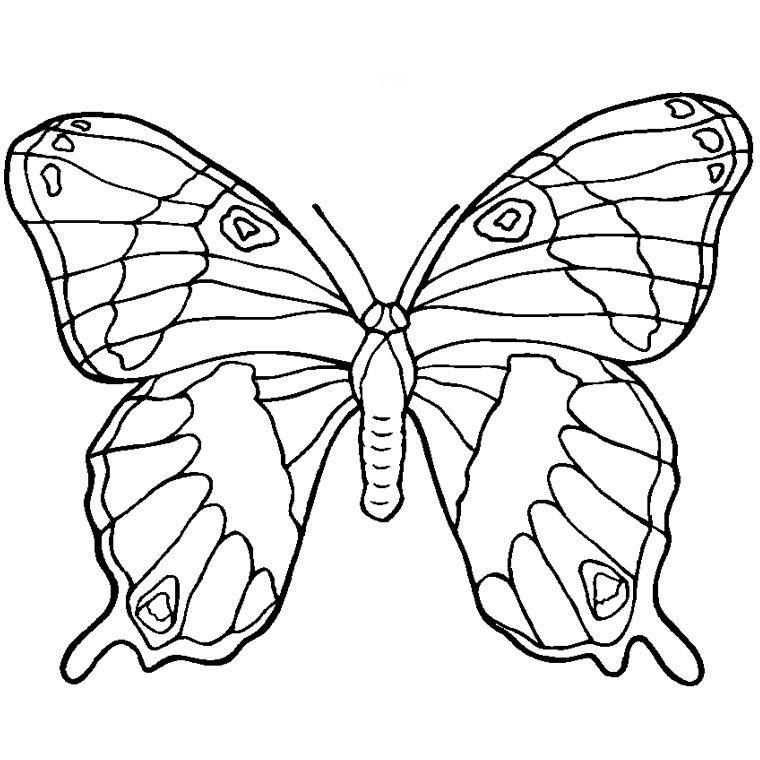 Coloriage Papillon A Imprimer Gratuit Coloriage Papillon Coloriage Papillon A Imprimer Papillon A Imprimer