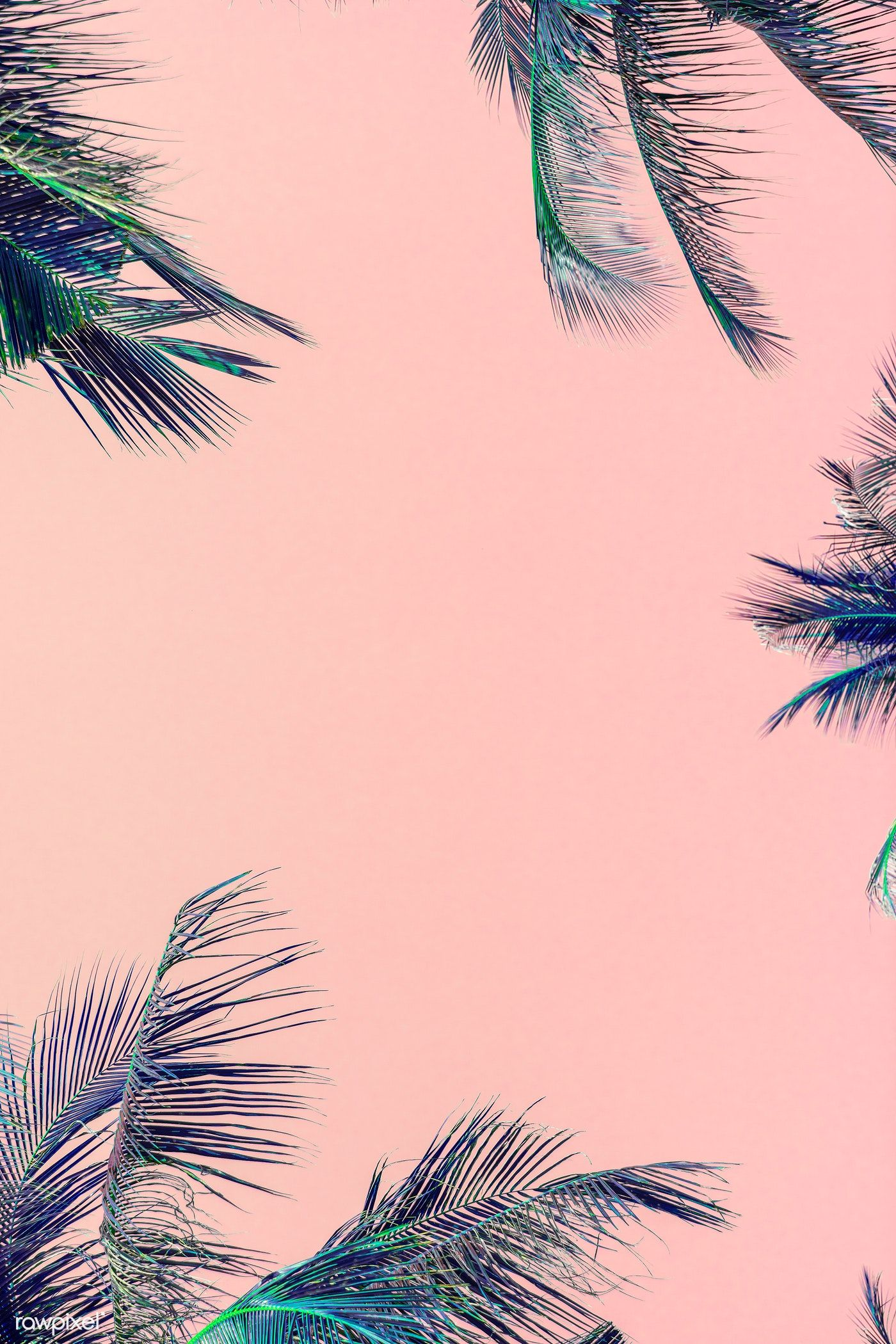 Tropical Green Palm Leaves On Pink Background Free Image By Rawpixel Com Awirwreckkwrar In 2020 Iphone Wallpaper Tropical Pink Background Leaves Wallpaper Iphone