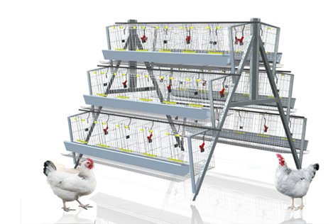 120 birds chicken battery cages - Ecochicks Poultry Ltd 0727087285 ...