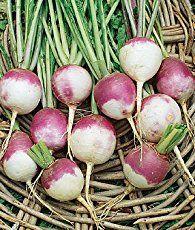 Companion Planting For Turnips | Growing turnips ... Turnip Companion Plants