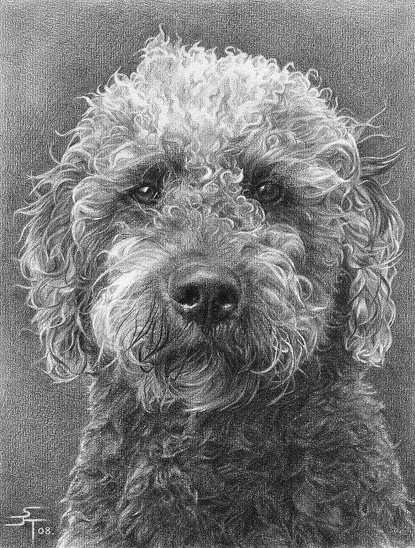 A4 Portrait Commission (Benny) by Sami Thorpe Animal