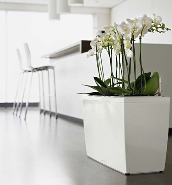 White Orchids | VIP Reception | Pinterest | Planters and Indoor