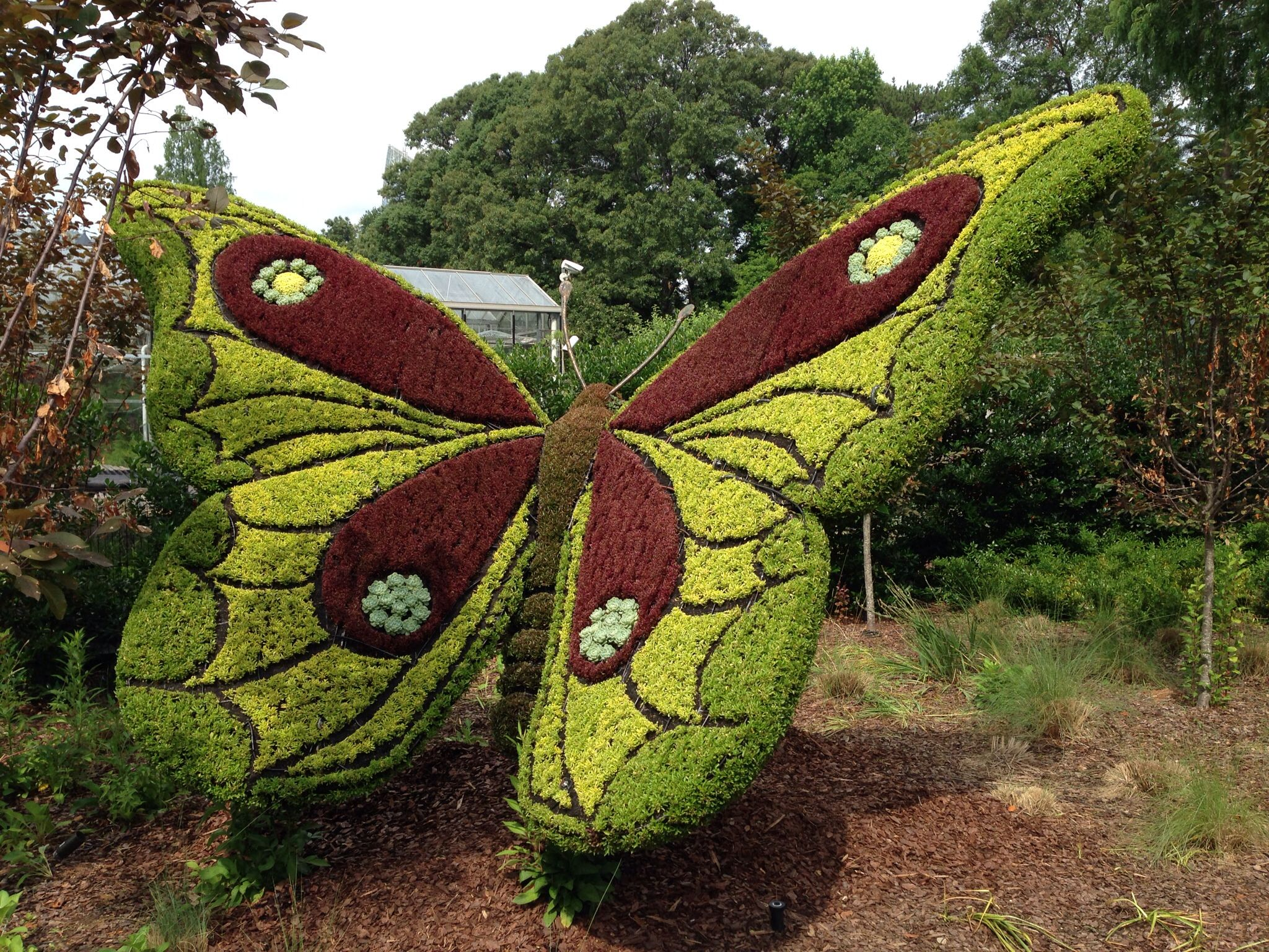 Butterfly Topiary Located In The Botanical Gardens In Atlanta Georgia.