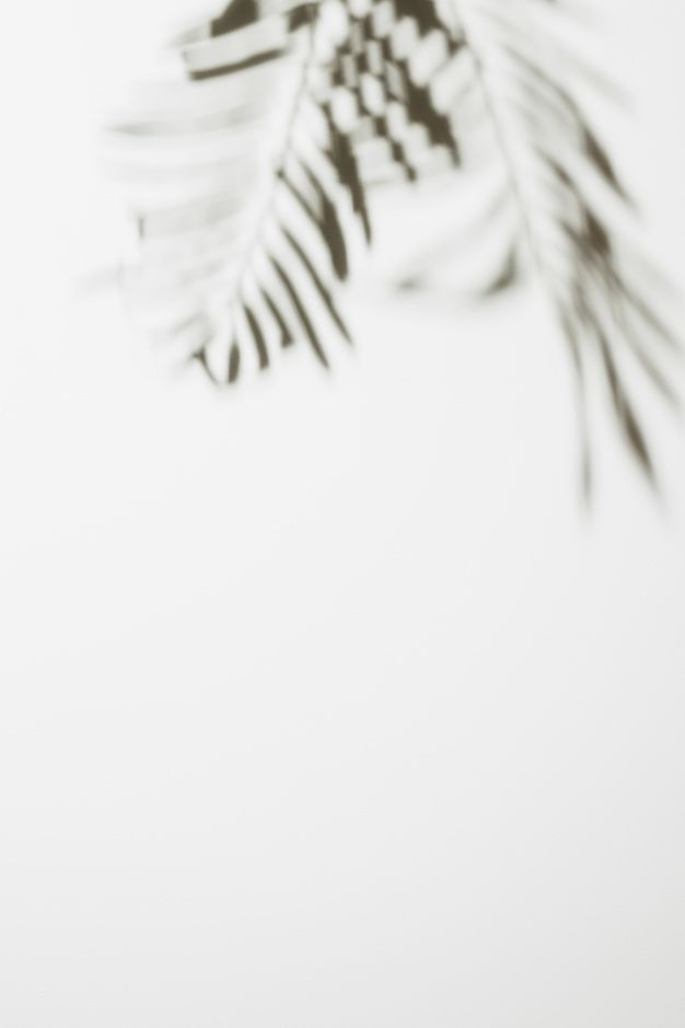 Download Blurred Palm Leaves Isolated On White Background for free