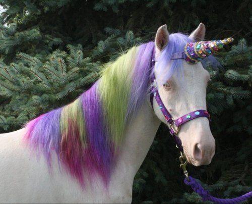 Unicorns Magical Fantasy Unicorn Horse Horse Costumes