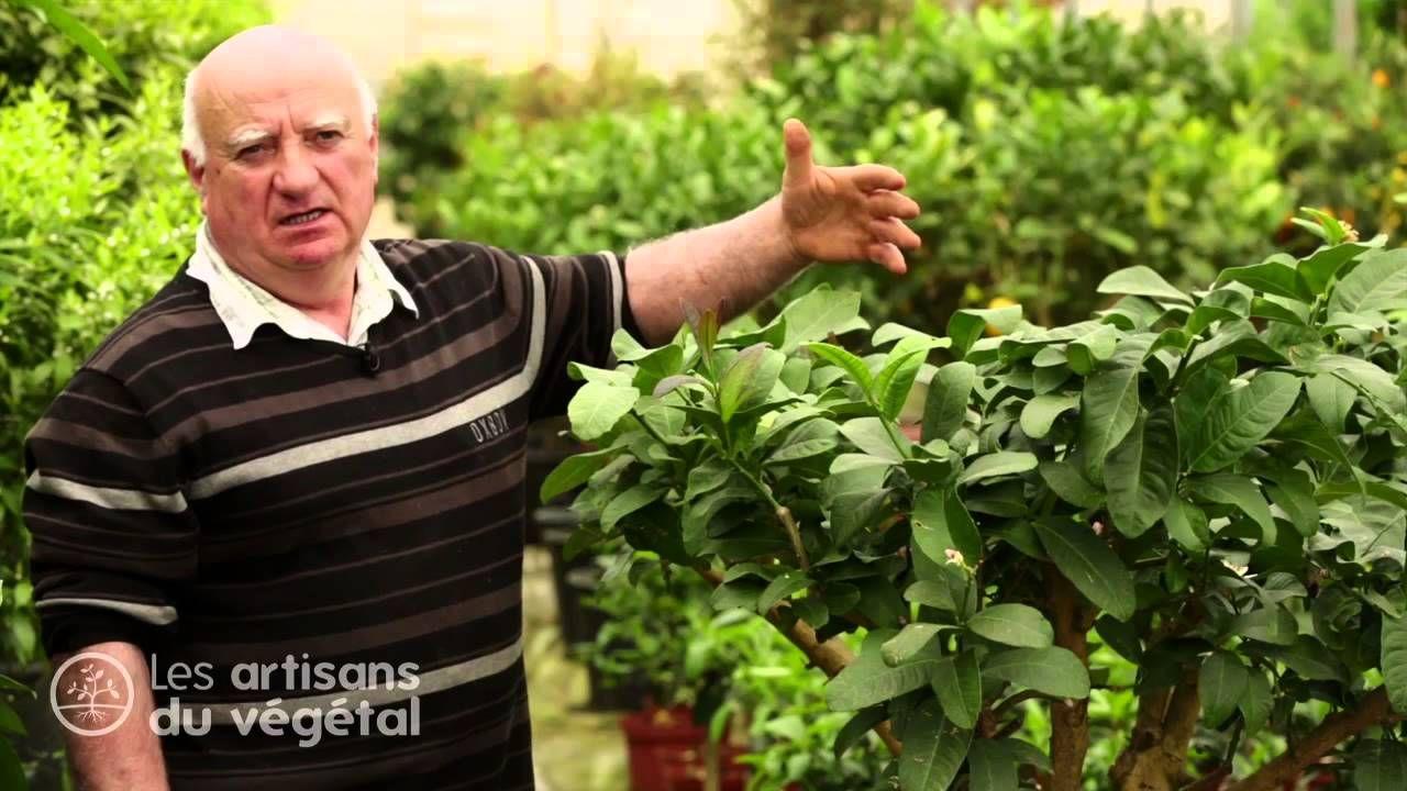 Epingle Sur Idees Et Techniques Jardinage