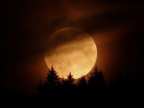 Night With A Beautiful Moon. Halloween MoonCreepy HalloweenMoon  QuotesMoonlight ...