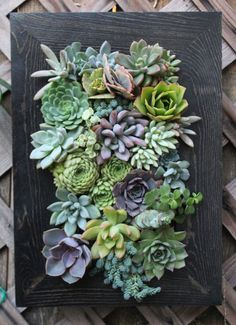 15 5  x 11  Picture Framed Succulent Vertical Garden Made to Order is part of Vertical garden Drawing - paint color options on pictures 6 & 7 Care instructions included  Low maintenance and makes an excellent gift!  (Just add the message you would like to include on a greeting card ) Please message me if you have any questions about the plants, planters or more information )