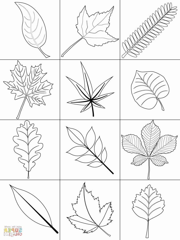 Tree Leaf Coloring Pages Unique Leaf Coloring Printables Leaf Coloring Page Fall Coloring Pages Autumn Leaf Color
