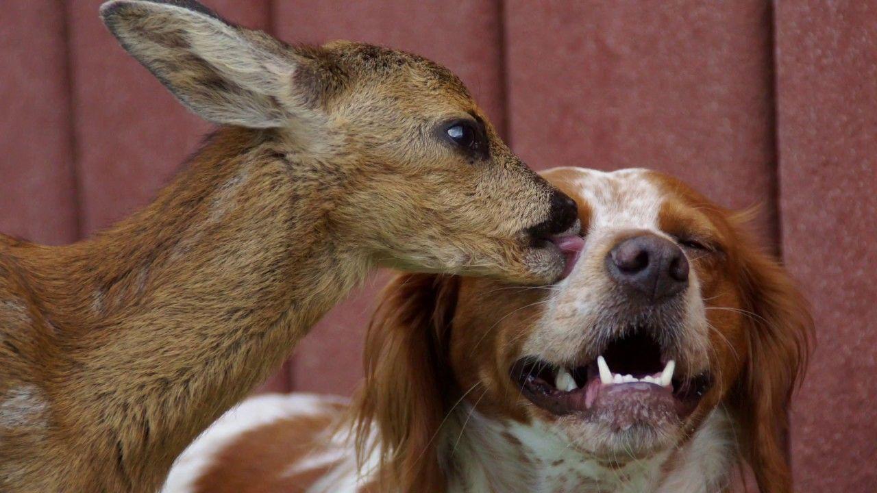 Rehkitz Kuschelt Mit Hund