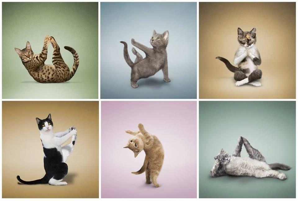 © www.yogacatz.com