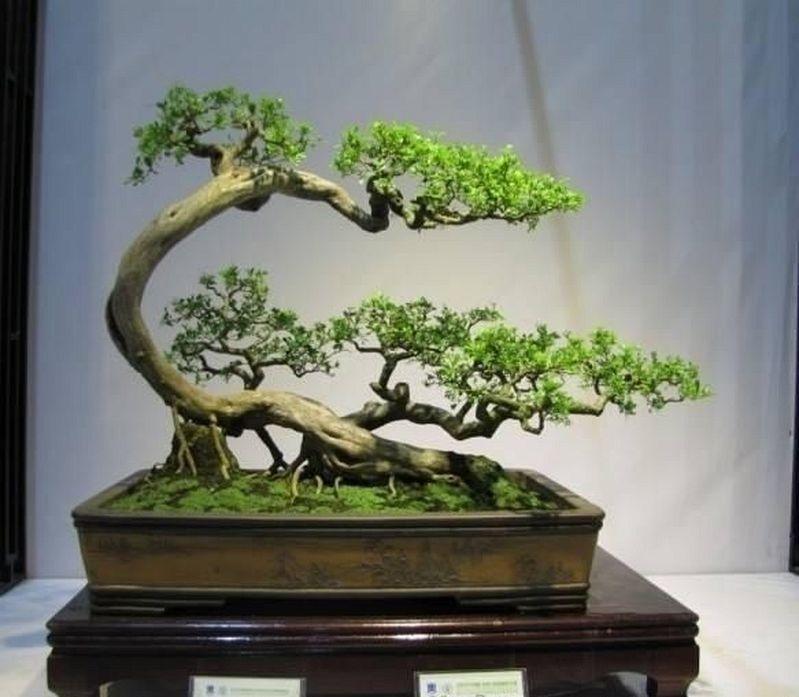 40 Best Bonsai Trees Ideas For Home Decor Inspiration Bonsai Tree Indoor Bonsai Tree Flowering Bonsai Tree