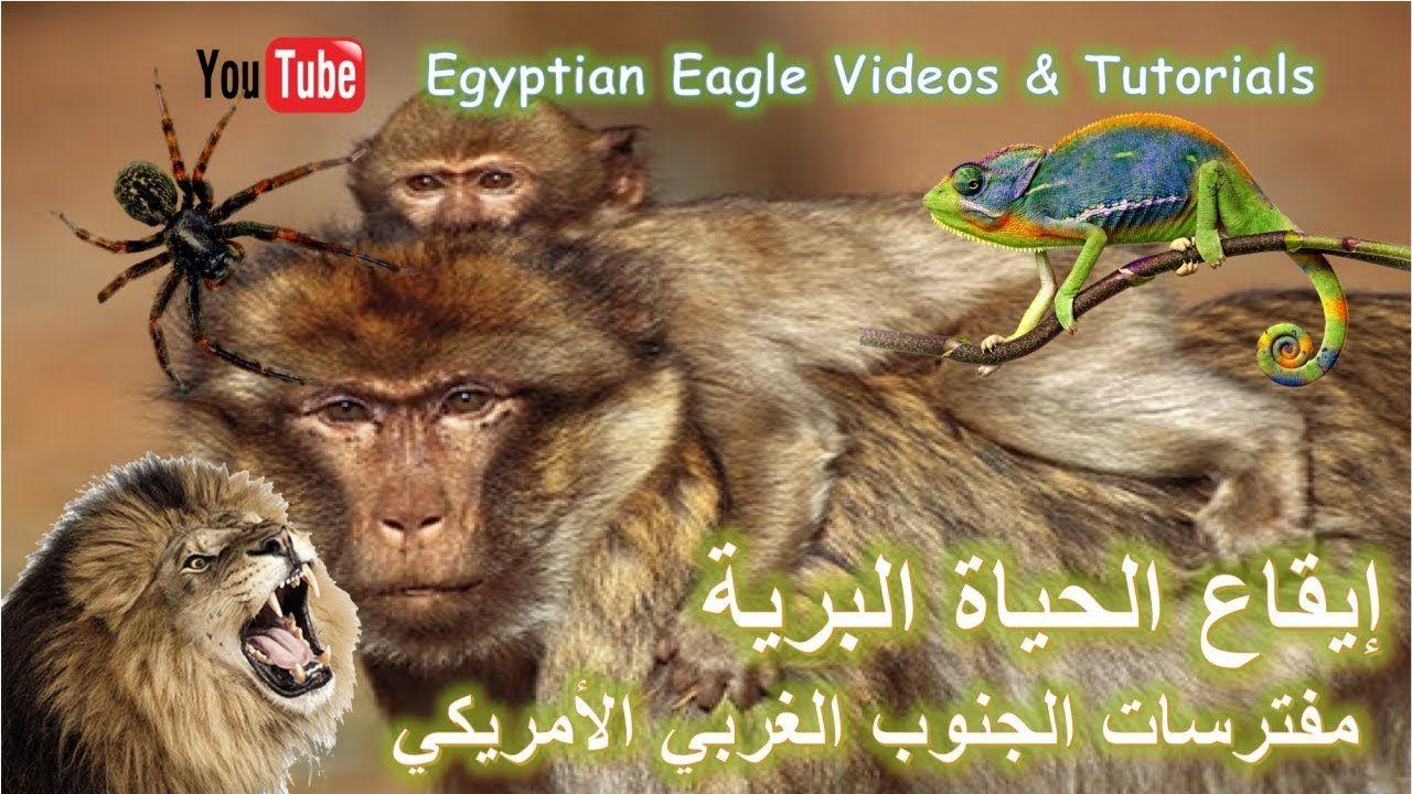 إيقاع الحياة البرية غرائب وعجائب حيوانات الجنوب الغربي الآمريكي المفترسة Youtube Animals Videos Tutorial