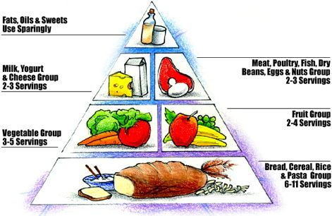 Worksheets Food Pyramid Guide 1000 images about food pyramid on pinterest healthy eating and kid foods
