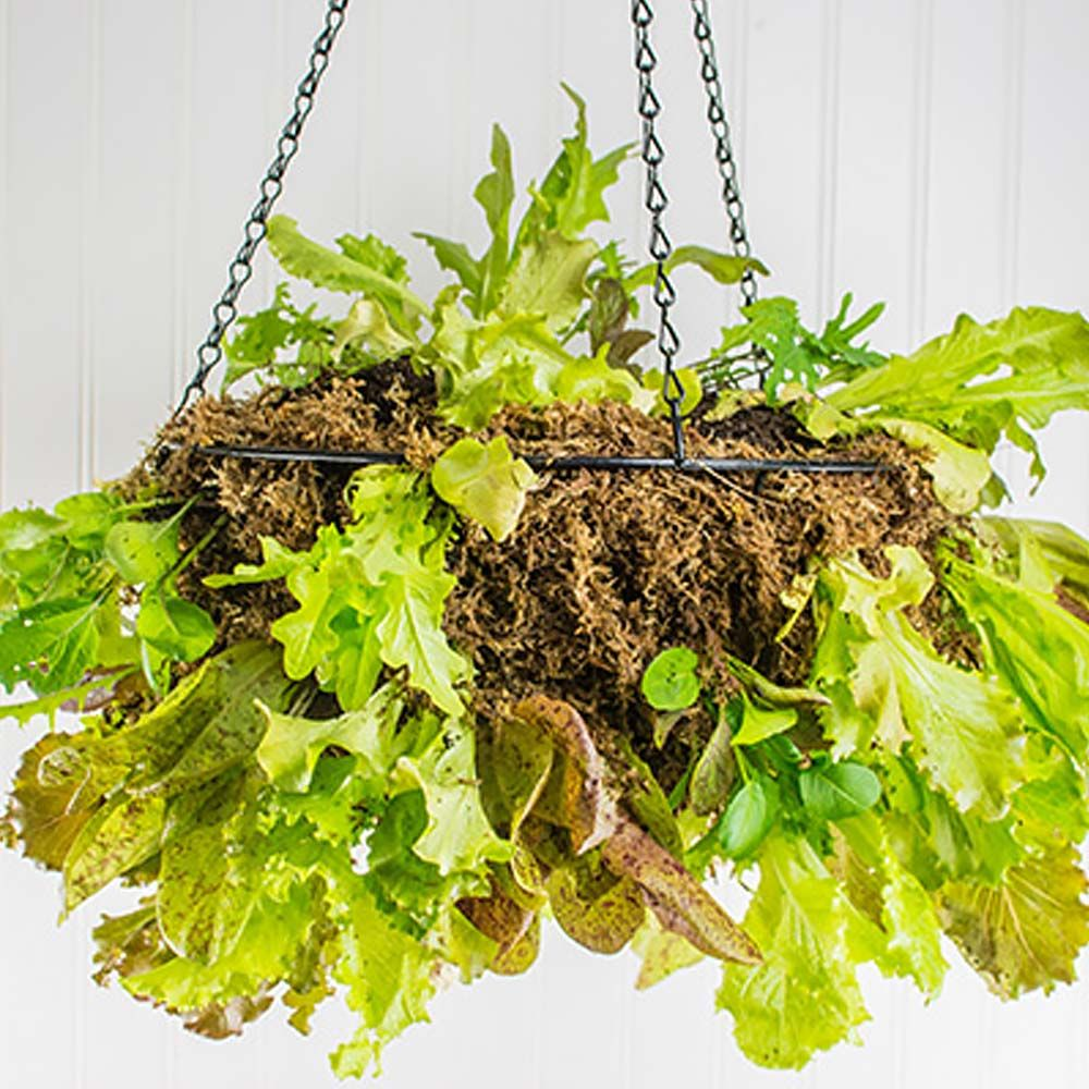 DIY Hanging Lettuce Planter The Home Depot Container