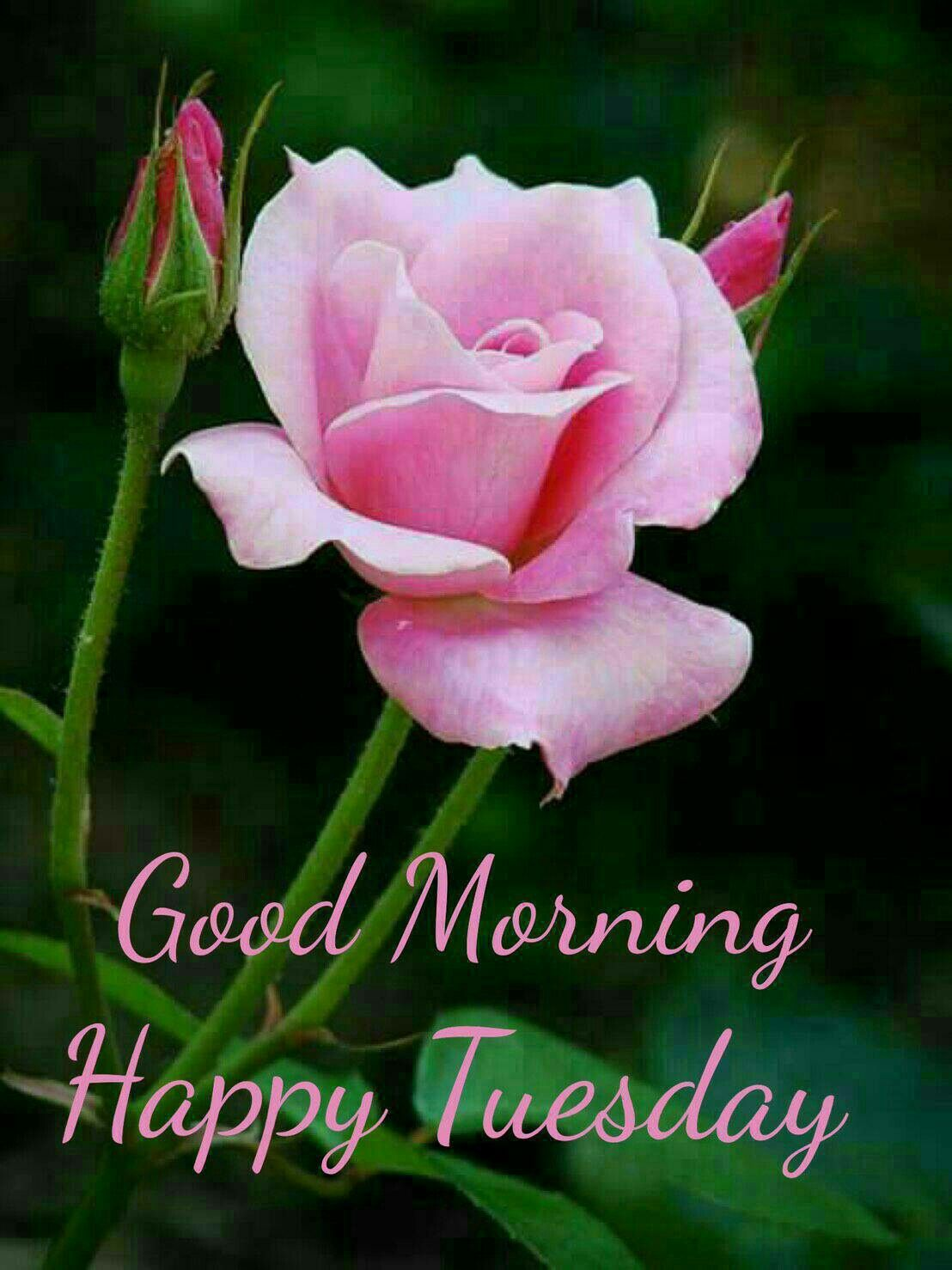 Tuesday blessings days of our livesgreetings pinterest tuesday blessings izmirmasajfo